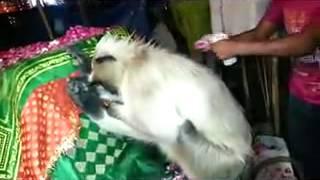 Download monkey pray dargah in delhi Video
