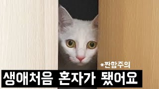 Download 고양이가 독립적이라고요? 생애 최초로 혼자 남겨졌을 때 반응 / 1편 Video