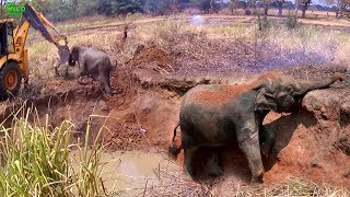 Download Funny elephant calf messes around with the caterpillar that saved her Video