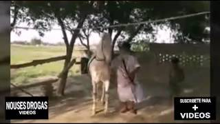Download UN NIÑO, UN HUMILDE TAMBOR Y UN CABALLO BAILADOR Video