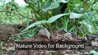 Download Nature Small Plant video for Background Video