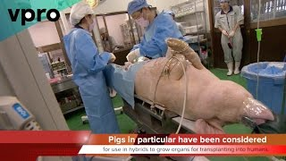 Download KTF News - Human Animal Chimera's Gestating on U S Research Farms Video