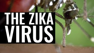 Download Zika Virus, Dengue and the Yellow Fever Mosquito - Professor Chris Whitty and Professor Francis Cox Video