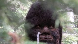 Download PhD's ″Astounded″ by Sasquatch videos and Proof of Bigfoot Video