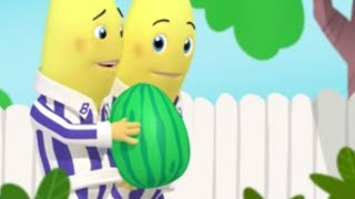 Download The Ping Pong Hiccups - Animated Episode - Bananas in Pyjamas Official Video
