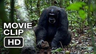 Download Chimpanzee Movie CLIP - Tools (2012) Disney Nature Movie HD Video