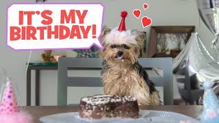 Download Throwing My Dog A Birthday Party - DIY Video