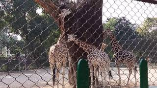 Download Kolkata Alipore Zoo || Awesome Experience 2018 || Must Watch || Part-1 Video