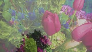 Download Deafheaven - ″Canary Yellow″ Video