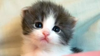 Download Cute Kittens And Funny Kitten Videos Compilation 2016 Video
