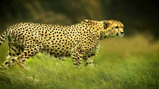 Download Wildlife photography - My best nature photos Video