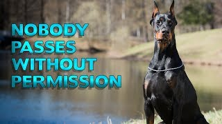 Download Dogs That Will Always Have Your Back | Top 10 Best Guardian Dogs for your Home Video
