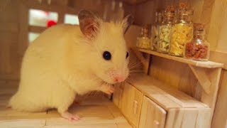 Download Tiny Hamster in his Tiny Kitchen I Video