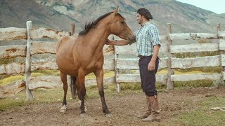 Download Wild Patagonian horse is masterfully tamed - Wild Patagonia - BBC Earth Video