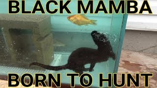 Download Episode 7- Diving For Aquarium Fish | Black Mamba: Born to Hunt Video