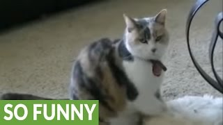 Download Cat hypnotizes dog, makes him fall asleep! Video