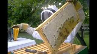 Download Pulling Honey Video