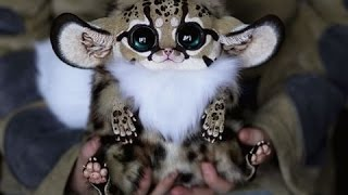 Download Super Cute Animals | Documentary 2015 Video