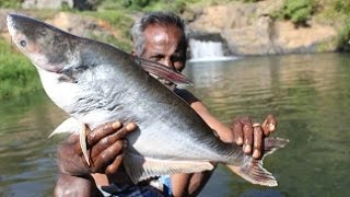 Download BIG FISH gravy with Idly prepared my daddy in ooty falls / VILLAGE FOOD FACTORY Video