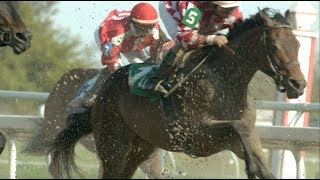 Download Three Races, Three Horses to Watch Video