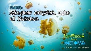 Download Stingless Jellyfish Lake of Kakaban Island [4K]   Indonesia from Below (S01E03)   SZtv Video