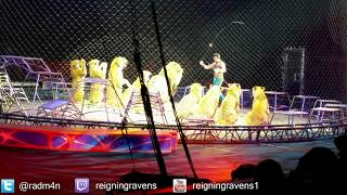 Download Lions and Tigers! | Chicago Ringling Brothers Circus Video