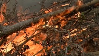 Download Arson suspected in Southeast wildfires Video