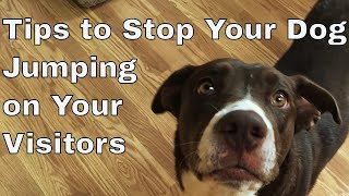 Download Train your Your Dog to Stop Jumping On Guests Video
