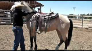 Download How to Mount & Dismount a Horse Correctly & Safely Video