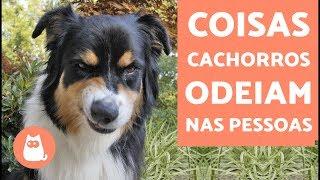 Download 10 coisas que os cachorros odeiam nas pessoas Video