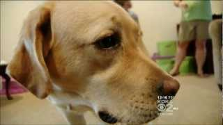 Download Service Dog accompanies Autistic Child to school. Video