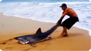 Download Great White Shark Rescue on the Beach Video