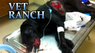 Download Janie, Hit By a Car (GRAPHIC) Video
