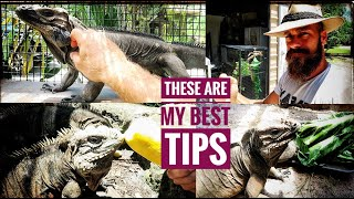 Download Reproducing Your Iguanas! Video