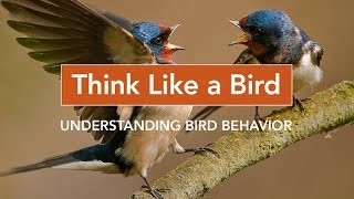 Download Think Like a Bird: Understanding Bird Behavior Video