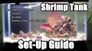 Download How to Set Up a Shrimp Tank & Shrimp Necessities Video