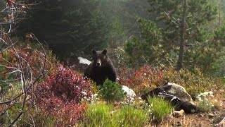 Download The Grizzly Truth (Trailer) Video