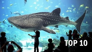 Download Top 10 Largest Aquariums in the World Video