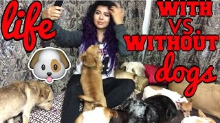 Download life with vs. without dogs #PetsAddLife Video