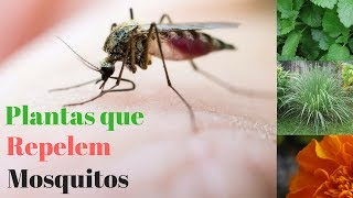 Download 7 Plantas que repelem Mosquitos Video