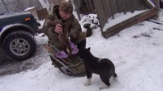 Download Обучение щенка лайки Video