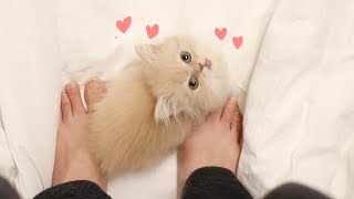 Download 심장폭격! 아기고양이 요지의 애교영상 모음 | 김메주와고양이들 Video