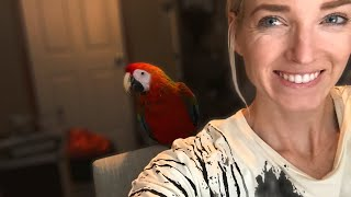 Download Bringing Home a New Bird | What Day One With a New Bird Looks Like!!! Video