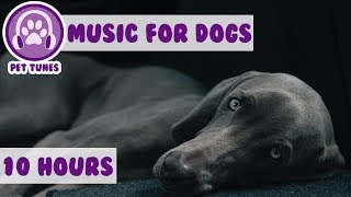 Download Relax My Dog in my House - Music For Dogs, Puppy Sleeping Lullabies - Helped 2 million dogs already Video