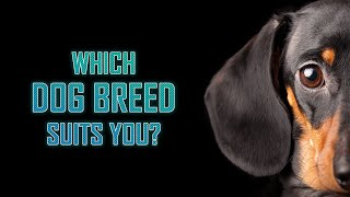 Download Which Dog Breed Suits You? Video