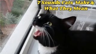 Download 7 Sounds Cats Make and What They Mean Video