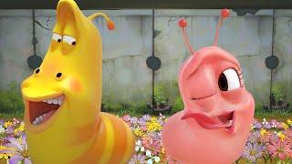 Download LARVA - Rosa kärlek | Tecknad film | Tecknade barn för barn | Larvtecknad | WildBrain Video