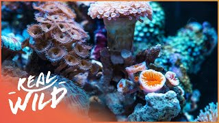Download Are Coral Reefs Dying? | Wild Things Documentary Video