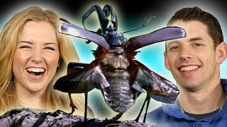 Download How do insects breathe without lungs? - You Asked #11 - Earth Unplugged Video