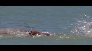 Download Home of Open Water Swimming - Balatonfüred, Hungary Video